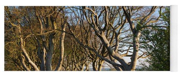 Tree Lined At Dawn, Dark Hedges Yoga Mat