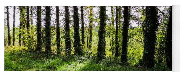 Trees On The Shannon Estuary Yoga Mat