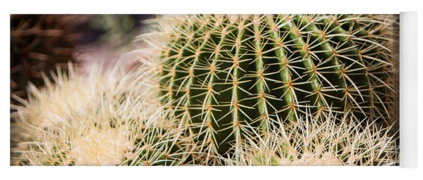 Yoga Mat featuring the photograph Triple Cactus by John Wadleigh