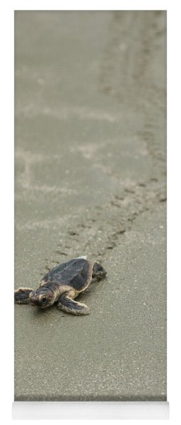 Turtle Tracks Yoga Mat