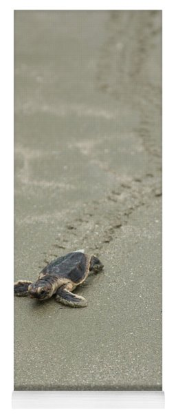 Turtle Tracks Yoga Mat