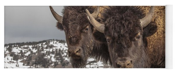 Two Bison Yoga Mat