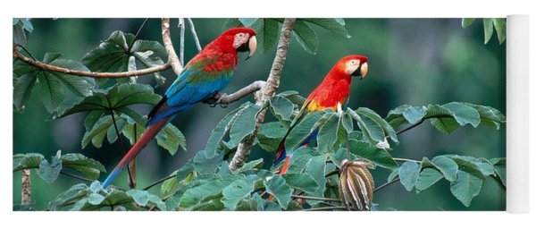 Two Macaws Yoga Mat
