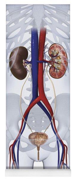 Urinary System, Illustration Yoga Mat