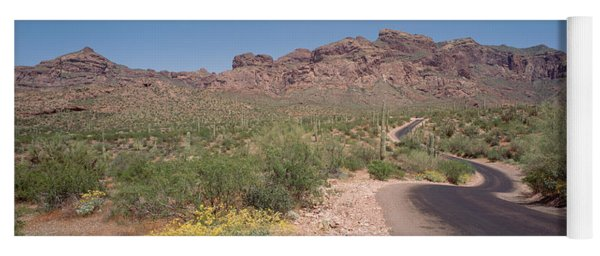 Usa, Arizona, Dreamy Draw Park, Cactus Yoga Mat