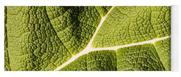 Yoga Mat featuring the photograph Veins Of A Leaf by John Wadleigh
