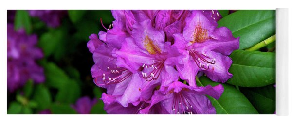 Washington Coastal Rhododendron Yoga Mat