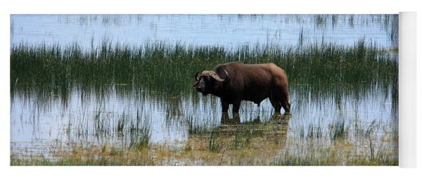 Water Buffalo At Lake Nakuru Yoga Mat