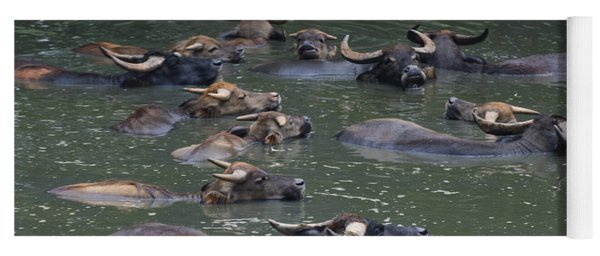 Water Buffalo Yoga Mat