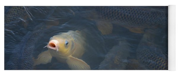 White Carp In The Lake Yoga Mat