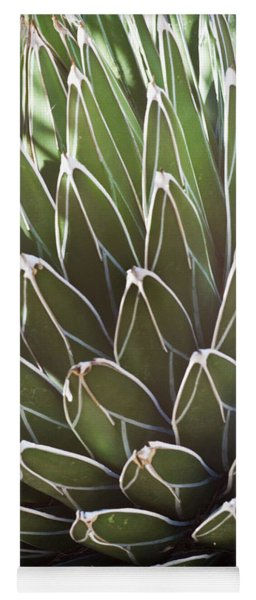 White Edged Cactus Stems 2 Yoga Mat