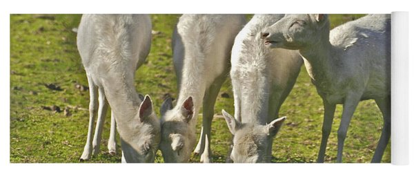 White Fallow Deer Mt Madonna County Park Yoga Mat