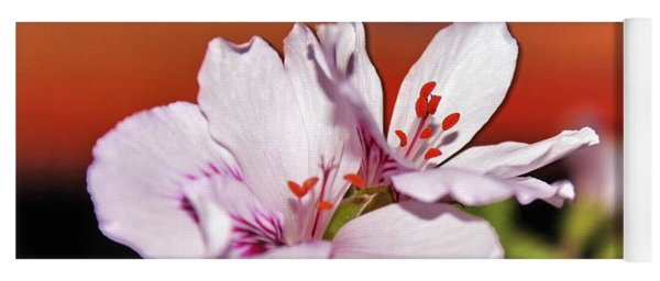 White Flowers And Orange Sunset By Julia Fine Art Yoga Mat