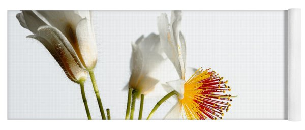 White Sparmannia Africana Plant. Yoga Mat