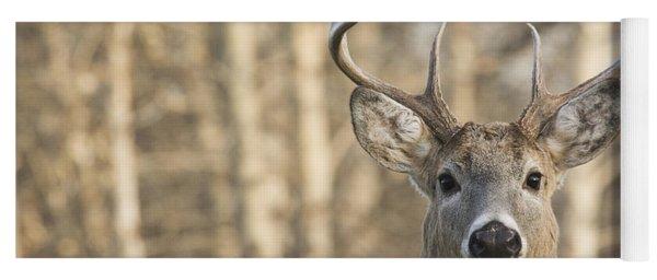 White-tailed Buck Yoga Mat