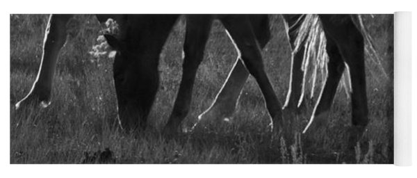 Wild Mustangs Of New Mexico 7 Yoga Mat