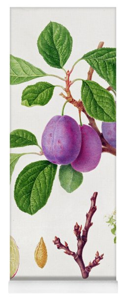 Wilmot's Early Violet Plum Yoga Mat
