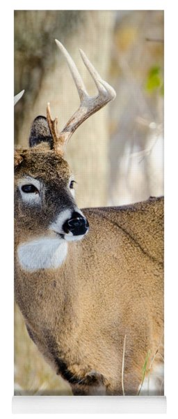 Yoga Mat featuring the photograph Winter Buck by Steven Santamour