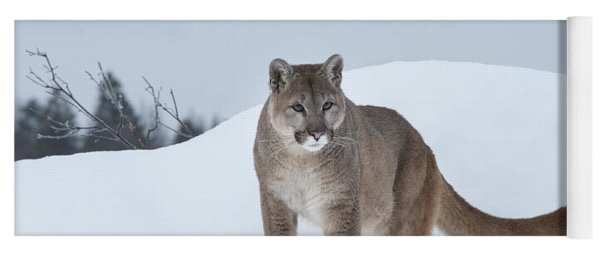 Winter Mountain Lion  Yoga Mat