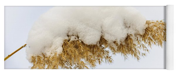 Winter Reed Under Snow Yoga Mat