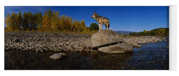 Wolf Standing On A Rock Yoga Mat