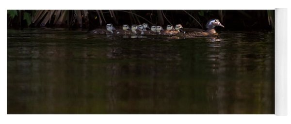 Wood Duck And Ducklings Yoga Mat