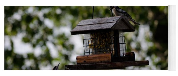 Woodpeckers At Dinner Yoga Mat