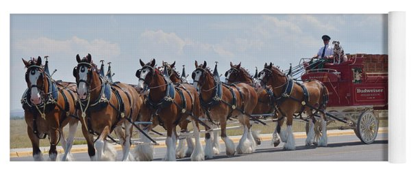World Renown Clydesdales 2 Yoga Mat