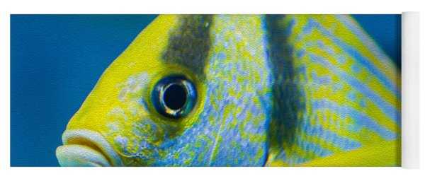 Atlantic Porkfish Yoga Mat
