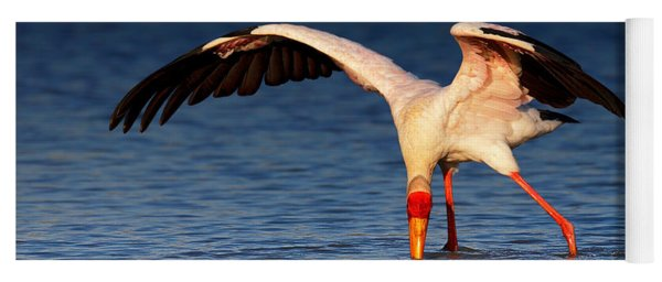Yellow-billed Stork Hunting For Food Yoga Mat