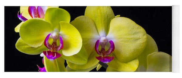 Yellow Orchids Yoga Mat