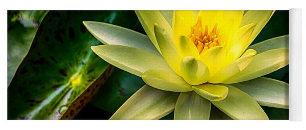 Yellow Water Lily Yoga Mat