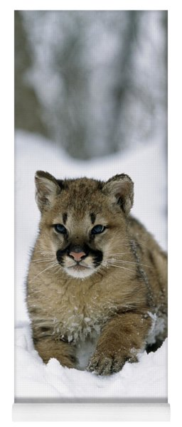 Young Cougar Yoga Mat