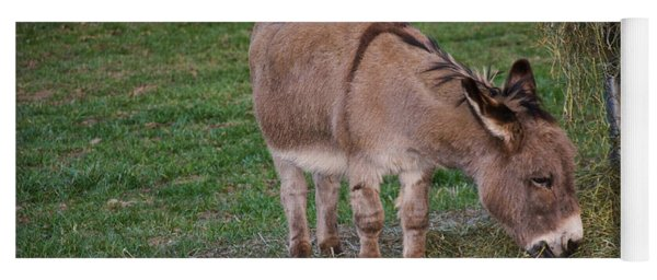 Young Donkey Eating Yoga Mat