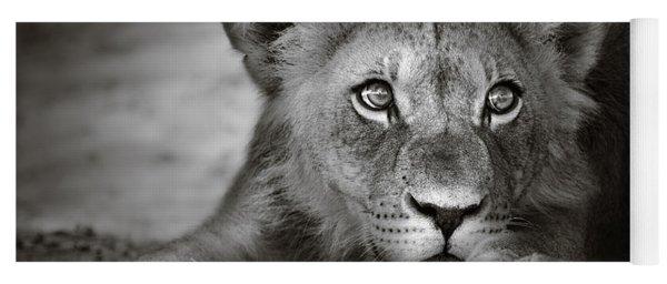 Young Lion Portrait Yoga Mat