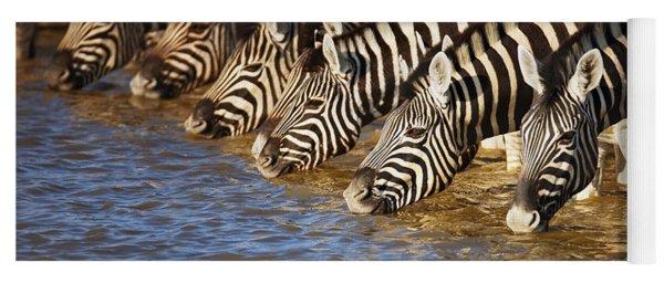 Zebras Drinking Yoga Mat