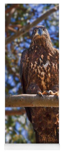 Immature Bald Eagle Yoga Mat