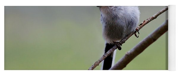 Long Tailed Tit Yoga Mat