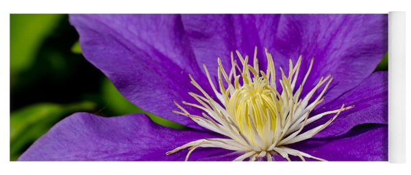 Purple Clematis Flower Yoga Mat