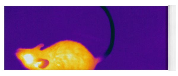 Thermogram Of A Mouse Yoga Mat