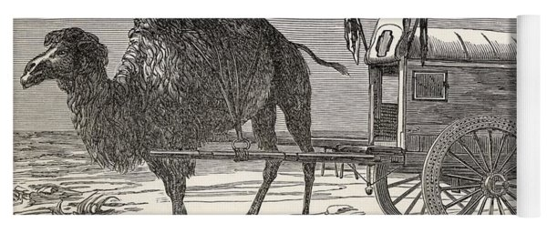 A Camel Pulling A Carriage Yoga Mat