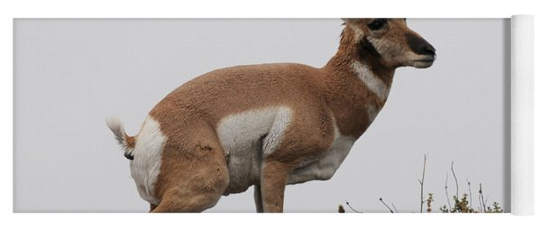 Antelope Critiques Photography Yoga Mat