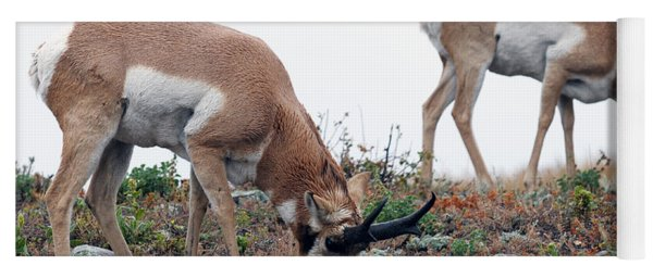 Antelopes Grazing Yoga Mat