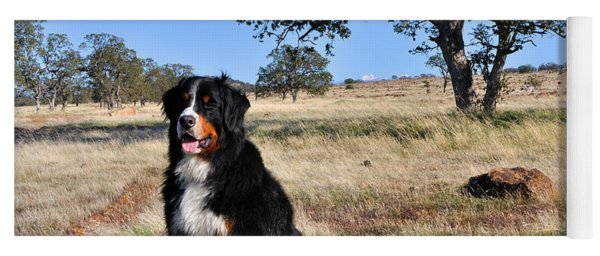 Bernese Mountain Dog In California Chaparral Yoga Mat
