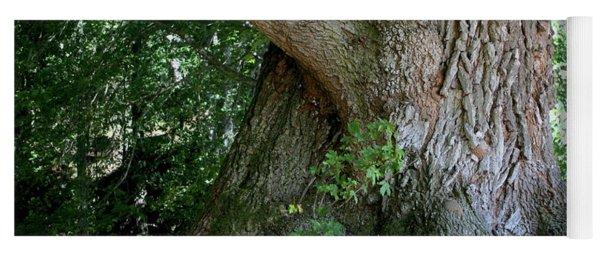 Big Fat Tree Trunk Yoga Mat