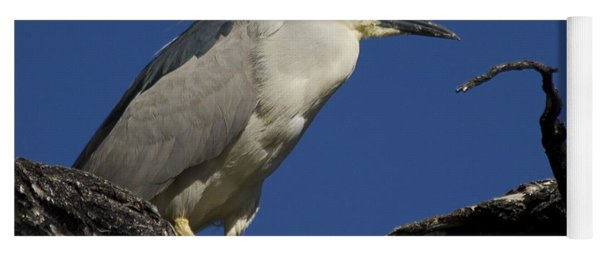 Black-crowned Night Heron Yoga Mat