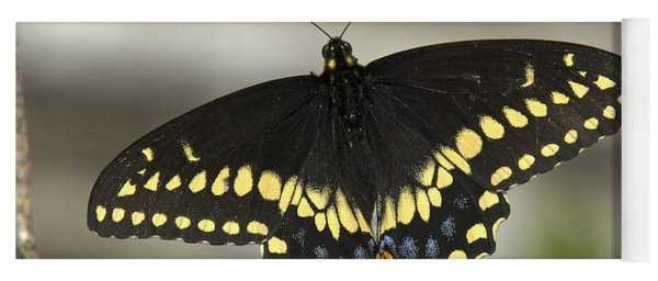 Black Swallowtail Din103 Yoga Mat