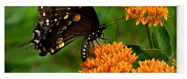 Black Swallowtail Visiting Butterfly Weed Din012 Yoga Mat