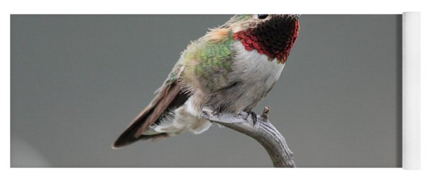 Broad-tailed Hummingbird Yoga Mat