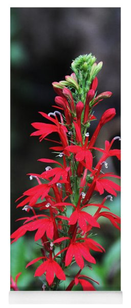 Cardinal Flower Yoga Mat